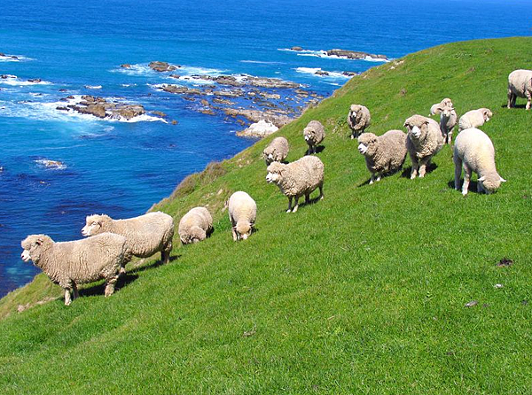 ✈✈ 小資遊學優惠-紐西蘭遊學代辦 gogoenglish