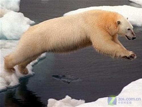 北極融化與北極熊.jpg