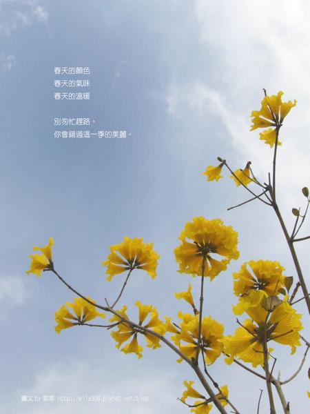 春天的小黃花.jpg