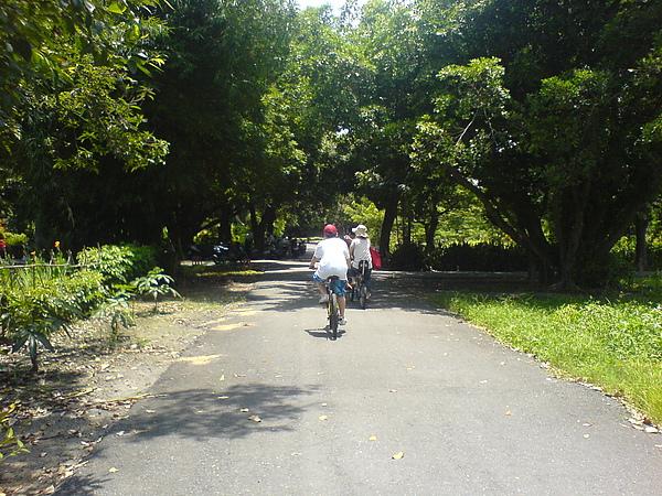 糖廠內騎單車.JPG