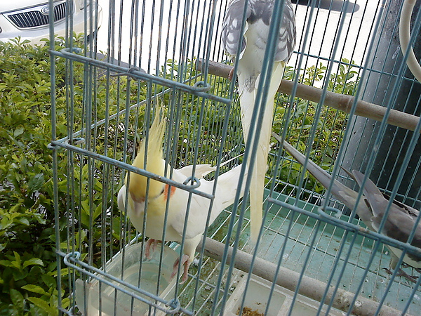 鸚鵡.JPG