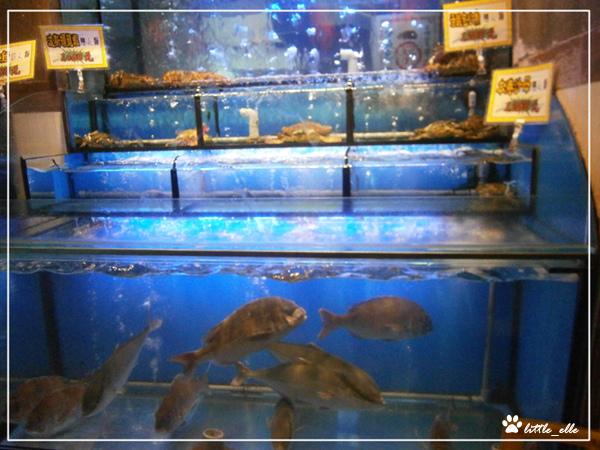 海角日式刷刷鍋~活魚&螃蟹.jpg
