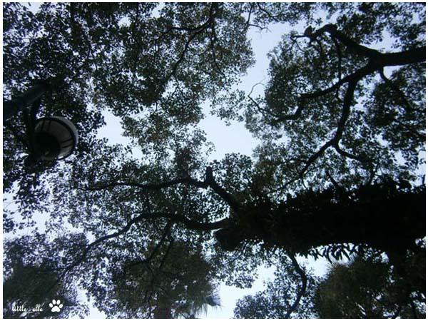 樹下.jpg