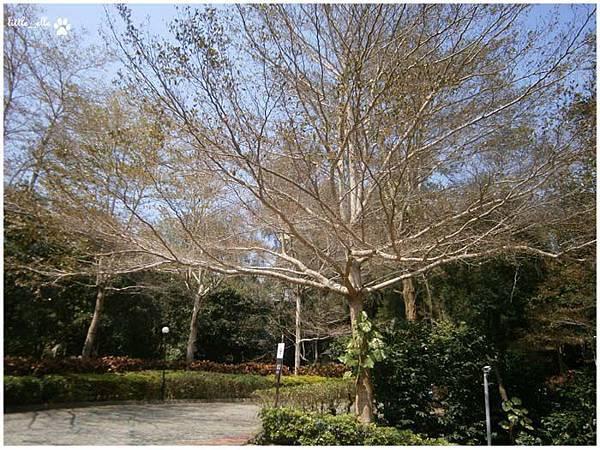 香格里拉樂園-大樹.jpg