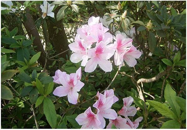 香格里拉樂園-花.jpg