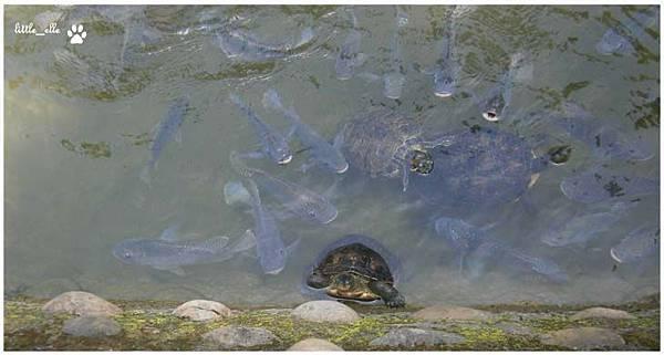 香格里拉樂園-烏龜&魚.jpg