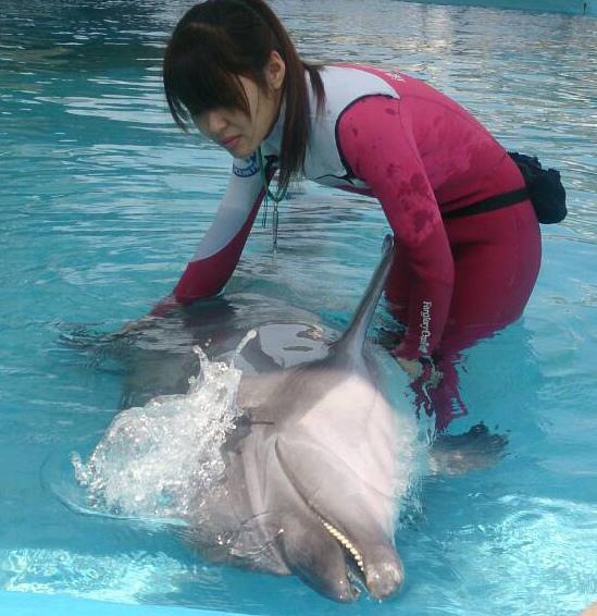 花蓮海洋公園-海豚.2.jpg