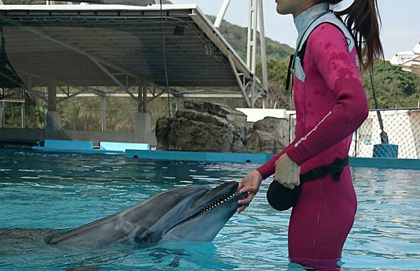 花蓮海洋公園-海豚.jpg