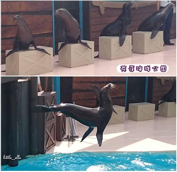 花蓮海洋公園-海獅.2.jpg