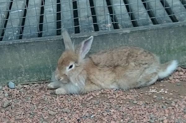 可愛動物區-兔兔.jpg
