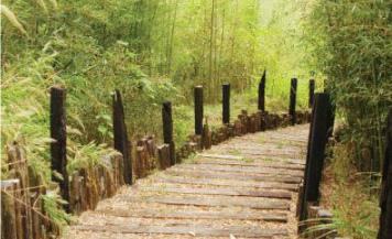 竹林步道.jpg