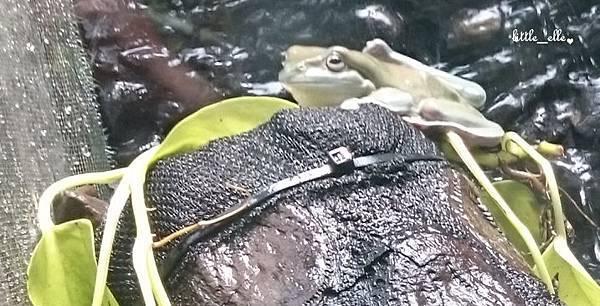 青蛙~~.jpg