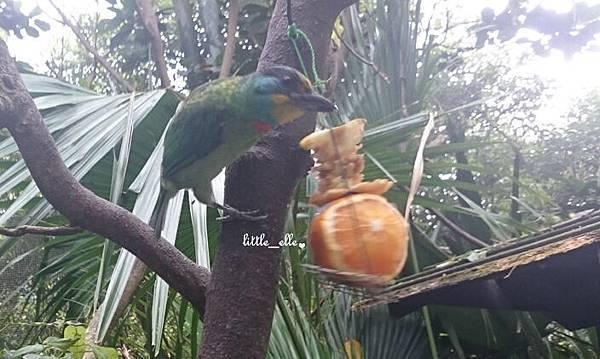 鳥類.jpg
