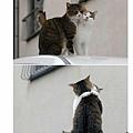 閃光貓.jpg