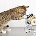 Kitty-Mart-l_large.jpg
