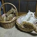 貓叔家族.jpg