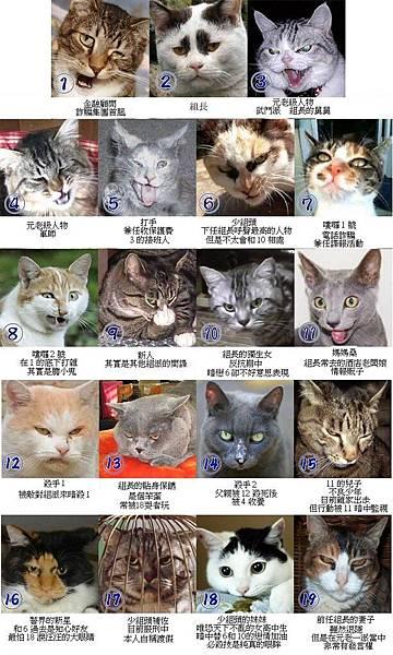 貓物介紹.jpg