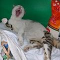 哈哈哈~外面的貓跌倒.JPG
