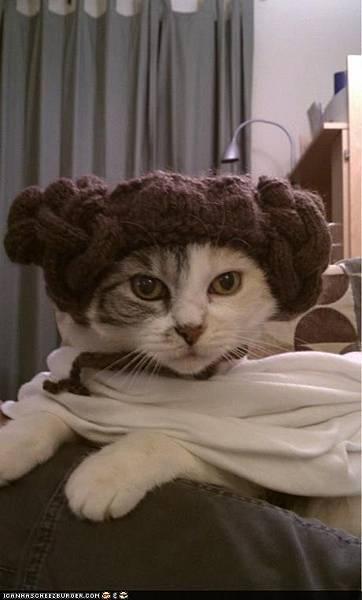 羊角貓.jpg
