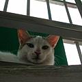 貓眼看人低.JPG