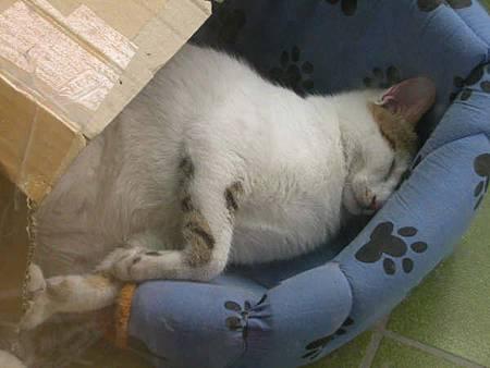 黑輪睡相超奇怪.JPG