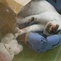 摸著兔子睡.JPG