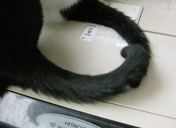 鉤尾巴.jpg
