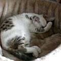 睡覺姿勢-把臉遮起來.JPG