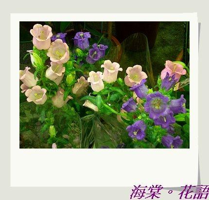 CIMG33601.jpg