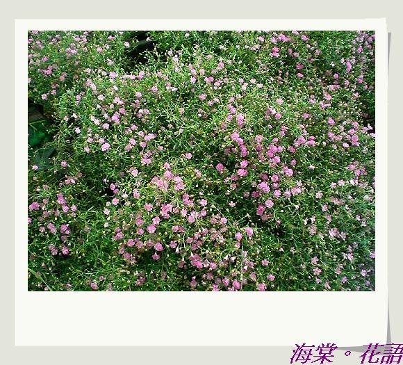 CIMG33641.jpg