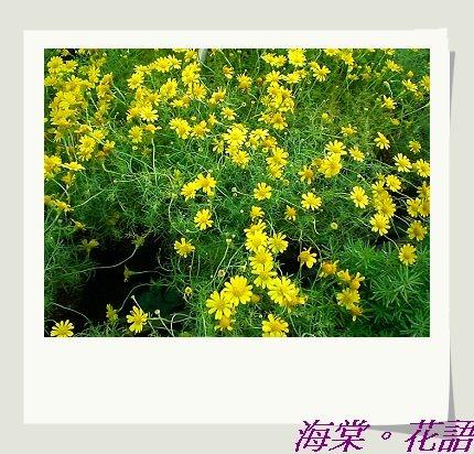 CIMG33661.jpg