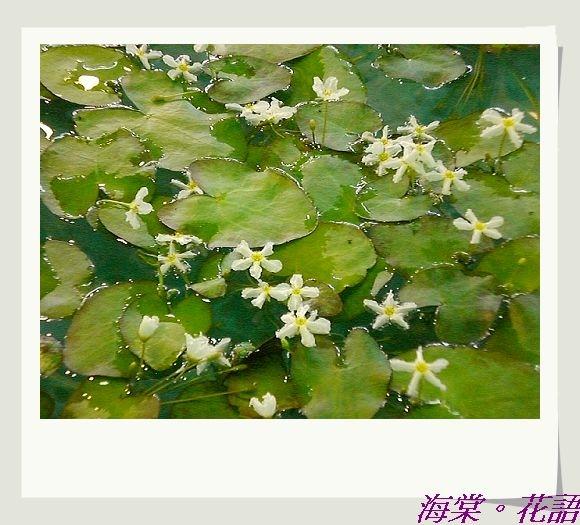 CIMG33801.jpg