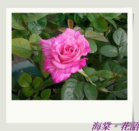 CIMG33881.jpg