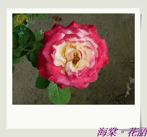 CIMG33921.jpg