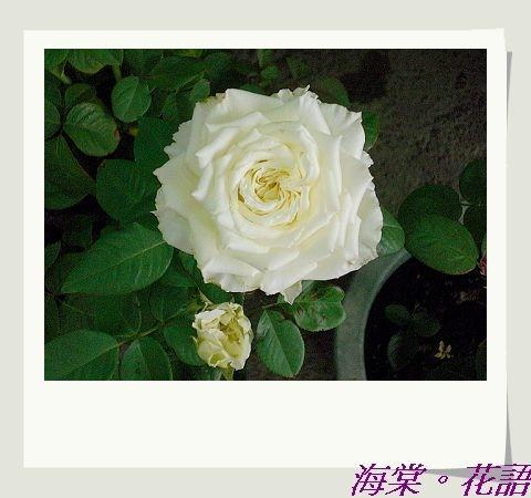 CIMG33941.jpg