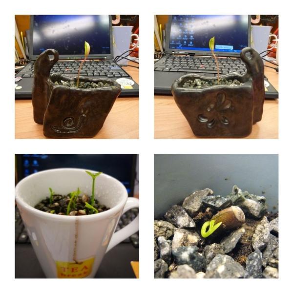 種子盆栽3