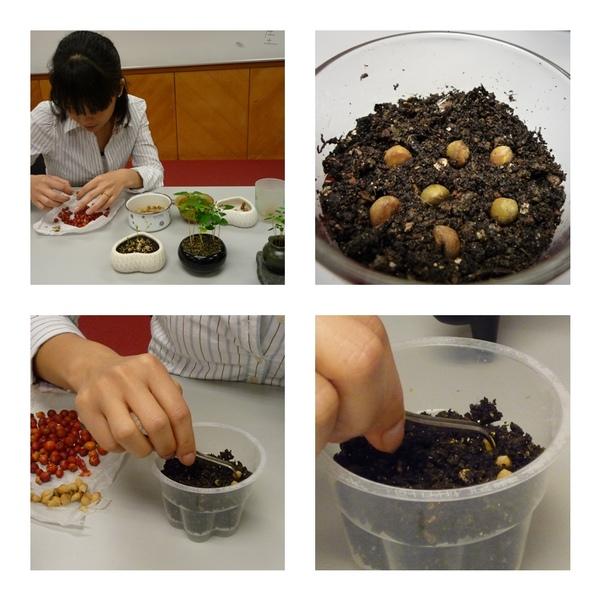 種子盆栽4