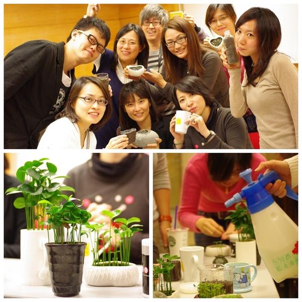 種子盆栽11