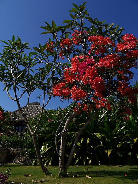 Bali 巴里島寶格麗 BVLGARI Villa76.JPG
