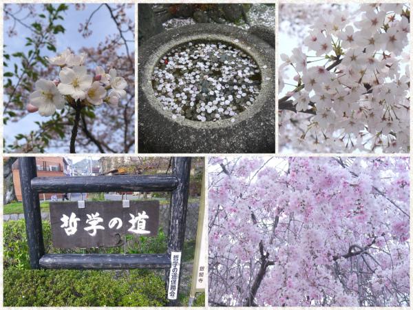 關西旅遊@京都-哲學之道、銀閣寺.jpg