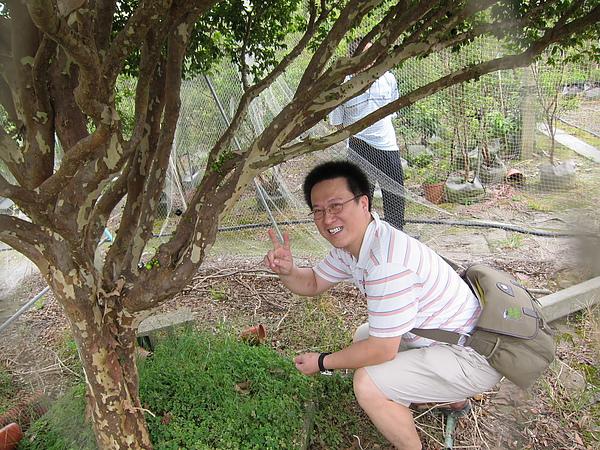 男哥在摘樹葡萄給大家吃