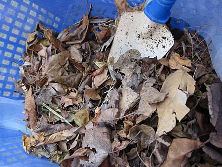 最底層放上空隙最大、最不易熟透的落葉