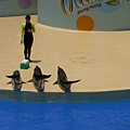 海豚跟大家say hello