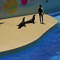 海獅也口愛
