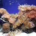 珊瑚水族箱