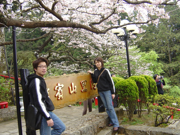 阿里山賓館是賞櫻的絕佳地點