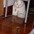 繩子讓貓咪無法抗拒