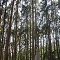 吃完飯在森林區喝咖啡