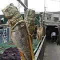 漁村生活剪影之曬鹹魚