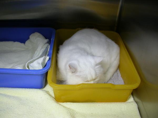 喜歡窩在貓砂盆的小寶><